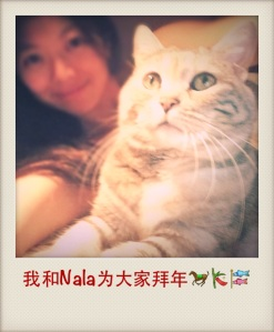 Nala meows you a Happy Year of the Horse!