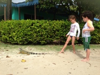 Lizards on Palomino Island