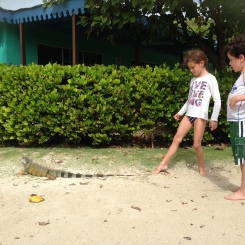 Lizards on Palomino Island