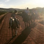 Wine tasting and horseback riding in Cape Town